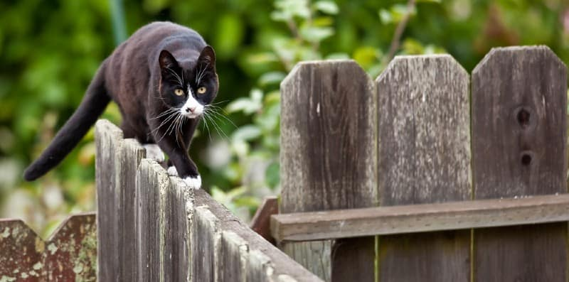 We decided to take a look at some of the best cat repellers and see how reliable they. No model worked for everyone but we did find some reliable models.