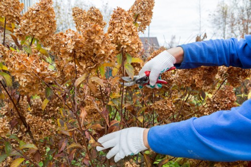 It is ideal to make the overall appearance as uniform as possible and to do that you want the branches to come out in proper spokes. Now, they probably won't grow to the exact arch and degree or angle that you want, but you can try and prune them to get them as close as possible.