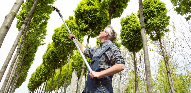 In this comparison, we compared 5 of the best telescopic tree pruners, with some innovative new models you have got to compare these models now.