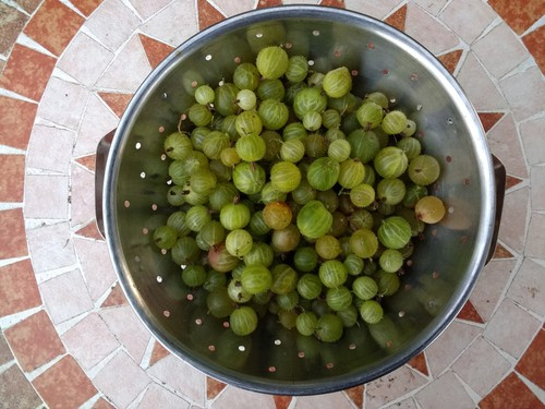 Gooseberries cleaned ready to store