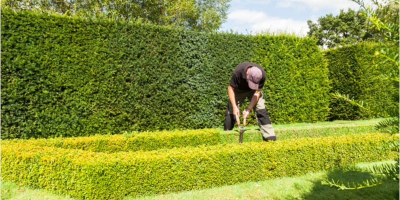 I talk about how to prune buxus and when to prune them to avoid burning the leaves or spreading diseases